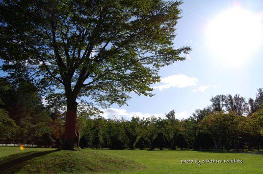太陽と一本木