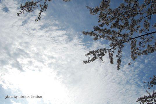 空と雲と桜と